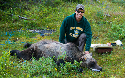Clayton prepares a grizzly bear for recovery after putting a GPS collar on it (Photo: Clayton Lamb)