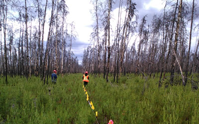 Grad student Angelo conducting regeneration transects on a burned seismic line in northern Alberta (Photo: Tobias Tan)
